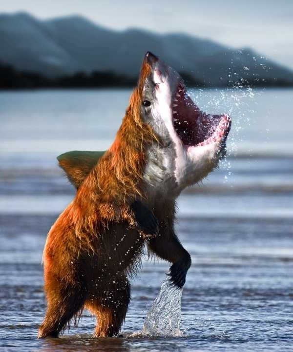 [Image: bearshark.jpg]
